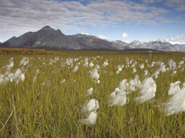 Arctic National Wildlife Refuge: How Drilling for Oil Could Impact Wildlife