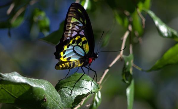 Guided butterfly walk