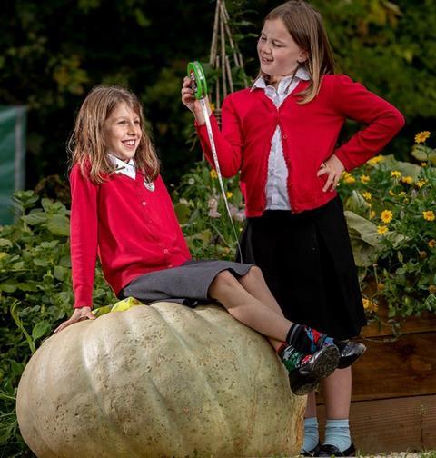 Two school pupils measure their giant pumpkin