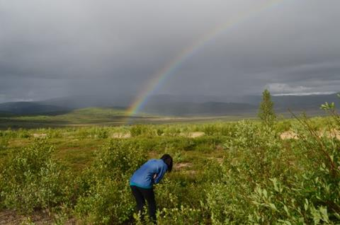 Vegetation in the far north is growing greener as temperatures increase. Here, a researcher at the edge of the tundra in northern Alaska. (Kevin Krajick/Earth Institute)