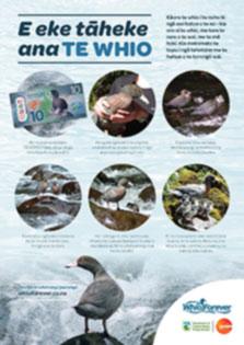 Whio surfing the rapids - E eke Taheke ana te whio - poster