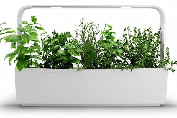 NEW CROWDFUNDED SMART GARDEN GIVES USERS A VERSATILE INDOOR GARDEN