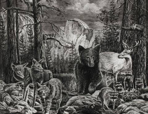 A precise charcoal drawing of Half Dome, featuring a variety of Yosemite wildlife including a bear and a bobcat.