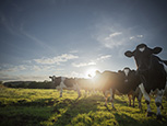 Latest Mad Cow scare shows that the system is working