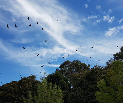Blue skies in Bendigo