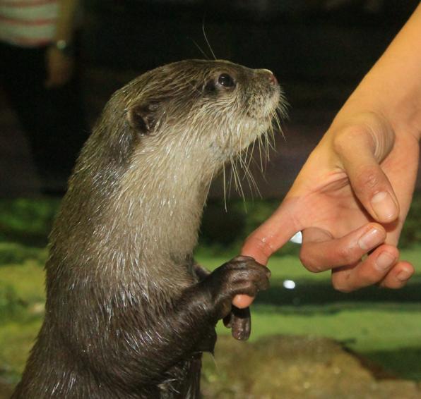 Otter at Dubai Aquarium & Underwater Zoo