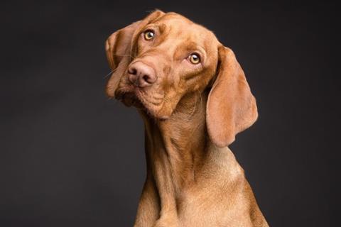 Linkedin Dog profile photos