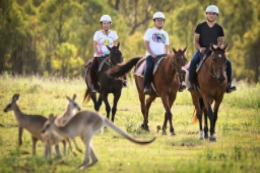 Queensland Horse Trail Riding Survey