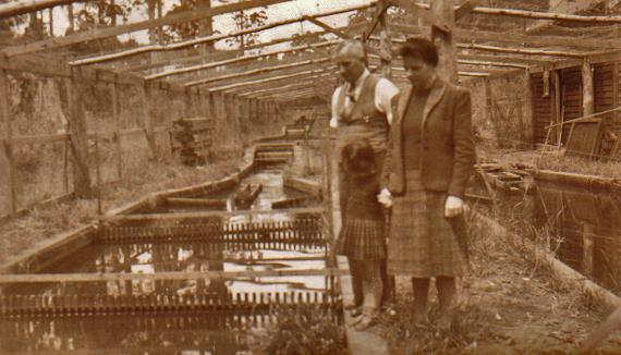 Trout Hatchery Pemberton 1943