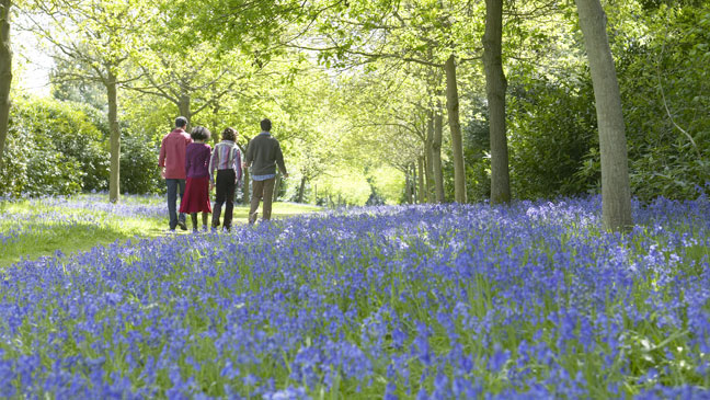 People walking in the blickling bluebells