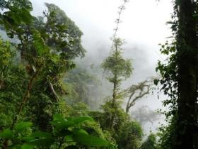 Chocó forest in Colombia. © Fundación ProAves.