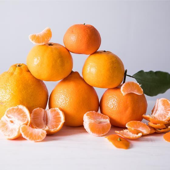 Various varieties of mandarin oranges