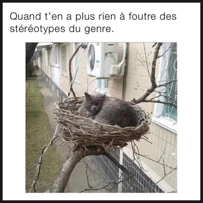 Patriar_cat