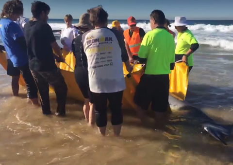 Lifesavers On Whale Watch