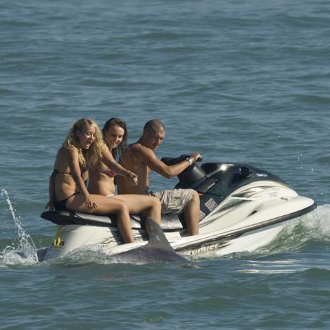 Jet skiers harassing dolphin