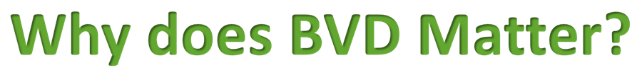 Why does BVD matter?