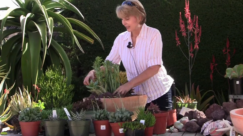 Debra Lee Baldwin at Roger's Gardens