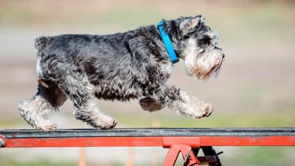 Dog agility area