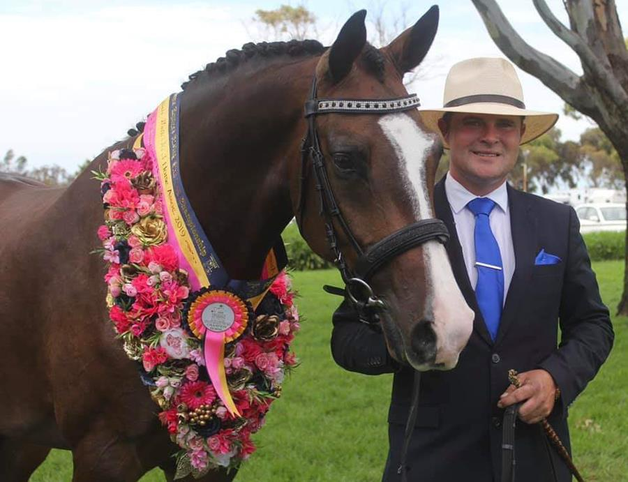 Winner of the 4 year old male and overall Led Horse Champion of Champions for 2019 was Bronwynn Short's Desert Sands Isle of D'Bling (Somerset D Isle/Isle of Calais). Bred by David Quick and led by Mitchell Fox, Isle of D'Bling also came 3rd in the 4 YO Dressage final and 6th in the 4yo Jumping final.