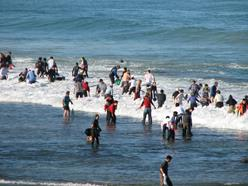 People collecting abalone off shore